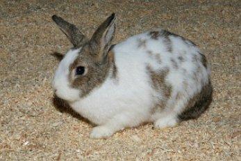 兔子耳朵软骨结构图