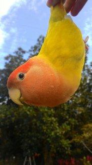 與鳥做朋友