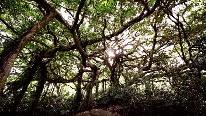 鸞山森林文化博物
